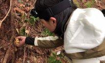 산행 중 만난 '야생 버섯' 직접 따서 확인해보니...