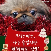 [카드뉴스]크리스마스, 나는 즐겁지만 반려견은 '악몽'