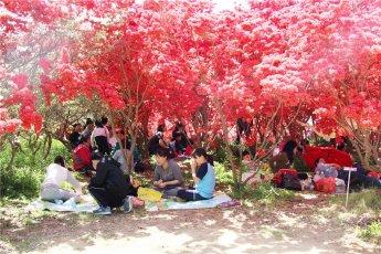완산공원 꽃동산과 전주비빔밥