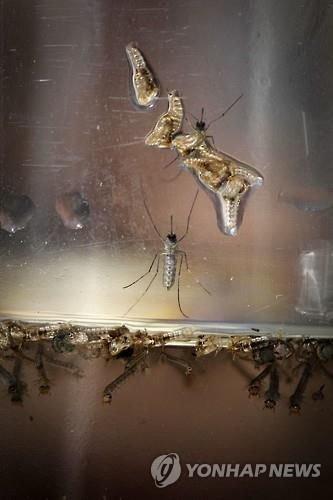미세플라스틱, 육상 먹이사슬마저 위협할 수 있어…모기 통해 오염