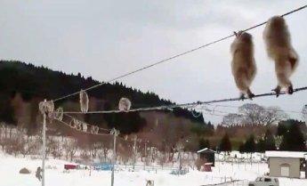 원숭이가 눈밭에서 발이 시리면…