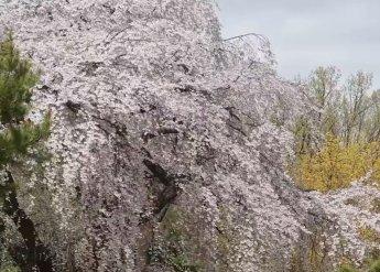 [과학을읽다]봄의 시작일은 언제?