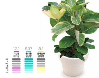 미세먼지 잡는 '공기정화식물', 정말 효과 있을까?…1평당 화분 1개씩 필요