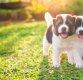 [화제의 연구] 사람들은 사람보다 '강아지'에게 더 동정심 느낀다