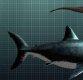 '돌인 줄 알았는데…' 수영하다 상어 이빨 화석 발견한 소년 '화제'