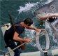 [집중기획 상어 vs 인간]③올여름 당신이 식인상어를 만났다면?… '조스'대처 10대 수칙