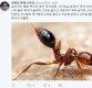 신동욱 &quot추석 차례상, 붉은 독개미…꿀 먹은 벙어리 대통령&quot