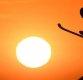 평창올림픽, 역대 최대 규모…92개국 2925명 출전