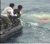 남해바다서 자취감춘 청상어 시제기
