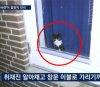 정유라가 키우던 수백만원대 '랙돌 고양이', 정 떠난 뒤...