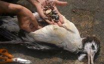 [과학을읽다] 슬픈 플라스틱<br>환경파괴에서 인류 파괴로