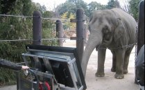코끼리가 태블릿PC로 수학문제<br>풀었더니…정답률 66.8%