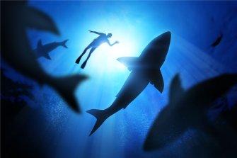 펠프스는 왜 하필 상어와 속도 대결? 걘 문어 수준이잖아