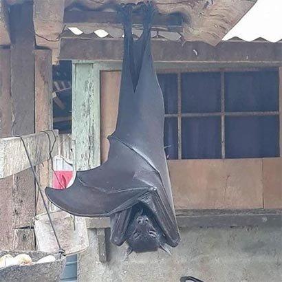'배트맨 인줄…깜짝'