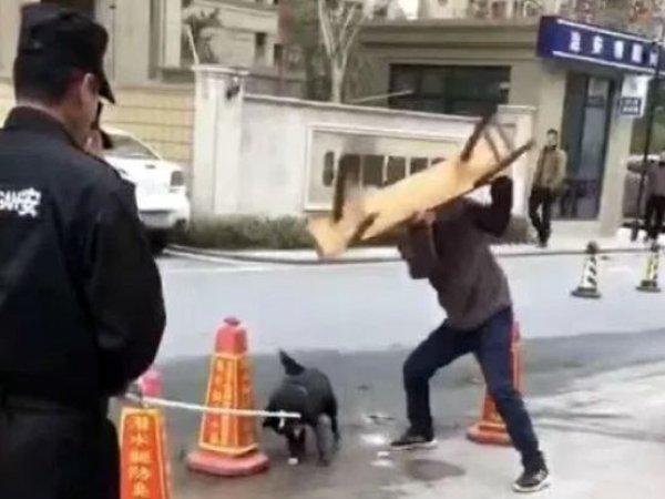 도심 유기견 때려죽인 中경찰, 그 이유는?