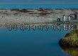 멸종 위기에 처한 '세계 희귀 동물 10'(영상)