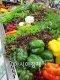 [건강을 읽다]만성 신부전 환자…과일·채소는 독!