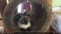 [애니멀 톡] 새로운 캣 타워에 흥분한 고양이(동영상)