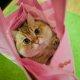[애니멀 톡]'팔로워 56만명' 과즙미 터지는 고양이 호시코