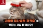 [카드뉴스]'애묘인'의 필수아이템, '고양이 집사능력 자격증'