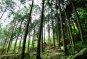 [여행만리]편백숲 '초록 샤워'…바람소리와 새들의 지저귐만 가득하다