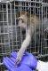 234일간 돼지 눈으로 세상 구경한 원숭이, 국내 각막 이종이식 연구 한 걸음 더 나아가