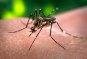불임모기 2000만 마리로 모기를 박멸한다…지카바이러스 막는 묘안