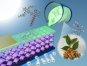 [과학을 읽다]호두향 식품첨가제로 태양전지 만든다