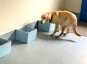 [황당뉴스]개가 냄새로 암환자 찾는다