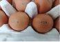 [2017결산-다사닭난③]살충제 계란에 가격파동까지…두 번 운 소비자들