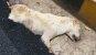 살아있는 개, 도로포장 공사 중 묻은 노동자들…'경찰 체포'