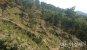 광양시, 덩굴제거로 조림목 생육환경 개선