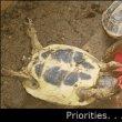 게으른 거북이