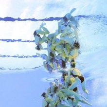 '아름다운 물속의 향연'