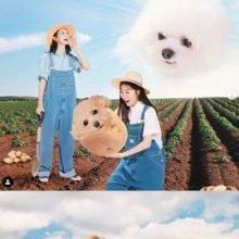 """""""화목한 가족같다"""" 다비치 농사 사진, 누리꾼들 사이서 화제"""