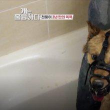 '개훌륭' 강형욱, 역대급 맹견과 2시간 대치…목욕 성공