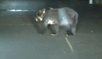 홋카이도서 초등학교 '곰' 난입...겨울잠 안자며 피해커져