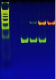 銀이 DNA를 만나면 발광하는 이유