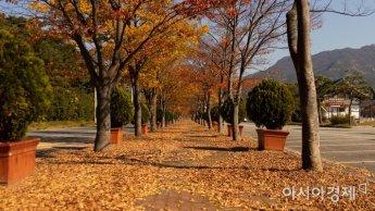 [포토] 영암 왕인박사 유적지 쌓이는 낙엽