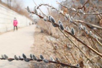 [포토]봄 알리는 버들강아지