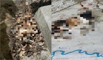 """""""무참히 연쇄적으로 죽어나가"""" 올림픽공원서 새끼고양이 연쇄살해"""