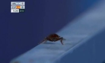 경기장에 출몰한 바퀴벌레...도쿄올림픽 위생문제 또 '도마 위'