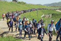 'DMZ 평화의 길' 파주 구간, 28일 운영 재개…회당 10명