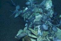 """""""5m 대형고래가 죽은 뒤…"""" 미국 해안서 사체 치우는 해양생물 포착"""