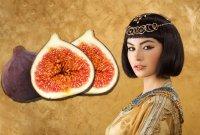 [드링킷] 여왕의 과일, 무화과 맛있게 먹는 방법