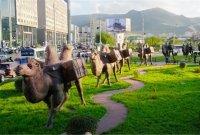 이번엔 온라인 해외(터키·몽골) 여행 떠나볼까?