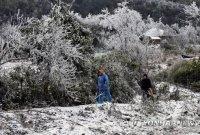 '눈이 펄펄 내렸습니다, 베트남에'…이례적 저온에 농업 피해·가축 폐사