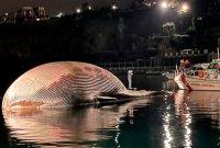 """""""가장 덩치가 큰 편"""" '무게 70t 길이 20m' 이탈리아 남부서 초대형 고래 사체 발견"""