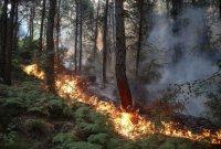 터키서 대형산불 발생해 8명 사망....남유럽 곳곳서 산불피해