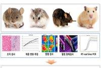 '중증코로나19' 감염된 '동물 모델' 세계 최초 개발